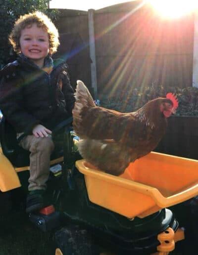 chicken rescue centres