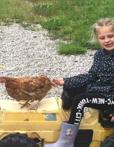 rehoming battery hens