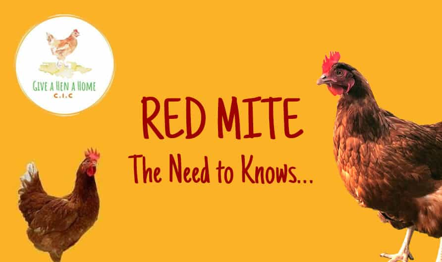 Red Mite – The Need to Knows…